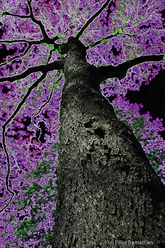 Magic Forest #11 - ID: 7916507 © Elliot S. Barnathan
