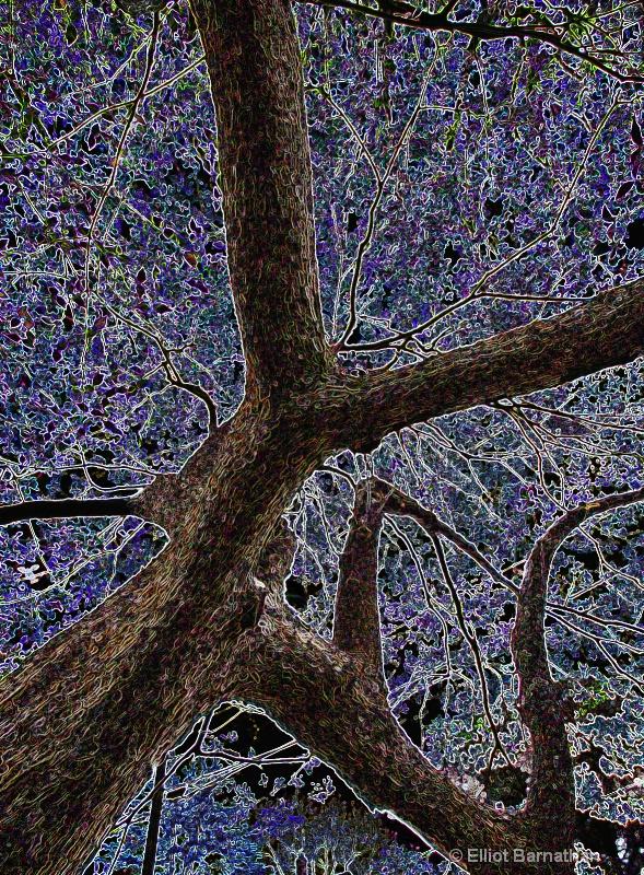 Magic Forest #7 - ID: 7916513 © Elliot S. Barnathan