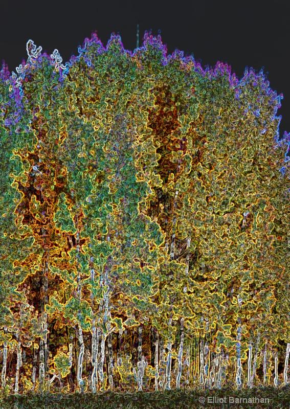 Magic Forest #3 - ID: 7918146 © Elliot S. Barnathan