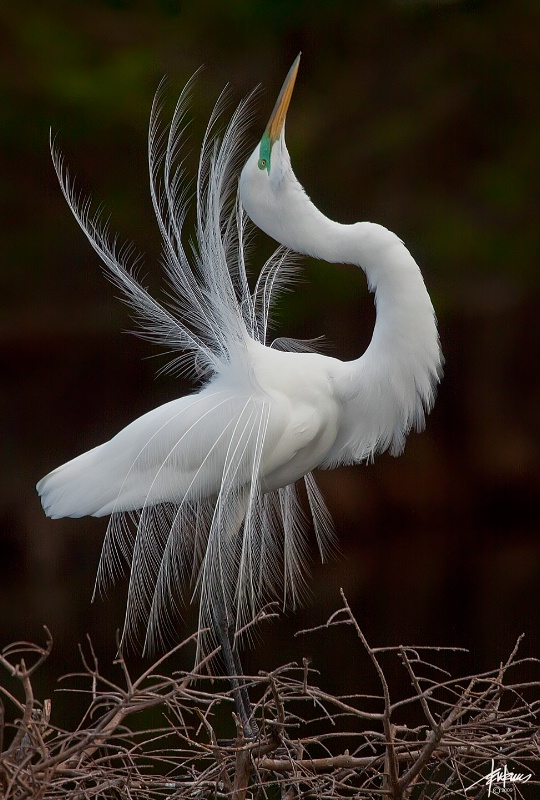 <b>Nature's Beauty I for 2009</b>