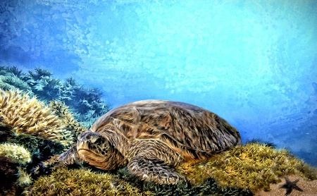 Honu At Rest