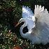 © Greg Lessard PhotoID# 7923848: Angelic Wings