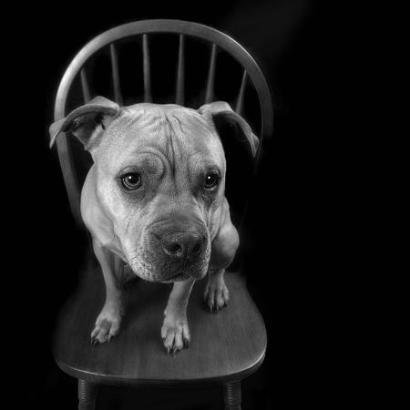 Good Sit