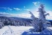 Snow Haven