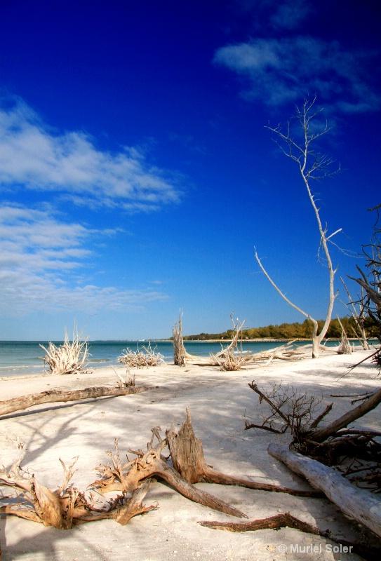 Siesta key, FL - ID: 7947821 © Muriel Soler