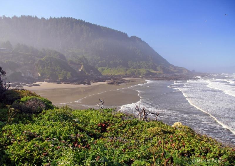 Oregon coast, OR - ID: 7947886 © Muriel Soler
