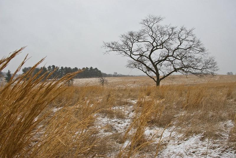 Grassland Tree