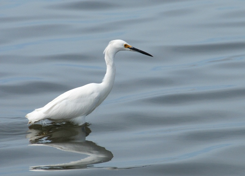 Egret and Silky Water