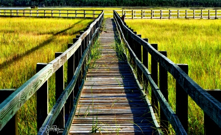 Wetland Tour