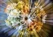 ~Burst of Sunshin...