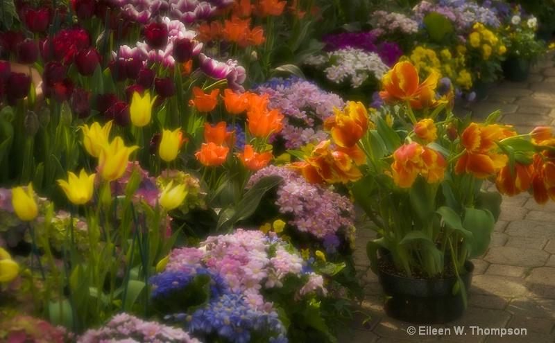 Spring Delight, Botannical Gardens, Buffalo NY