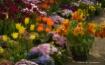 Spring Delight, B...