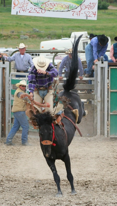 Ride'm Cowboy