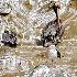 © Krystian Madejski PhotoID # 7993741: Birds detail