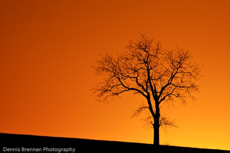 Sunset 2009-03-06