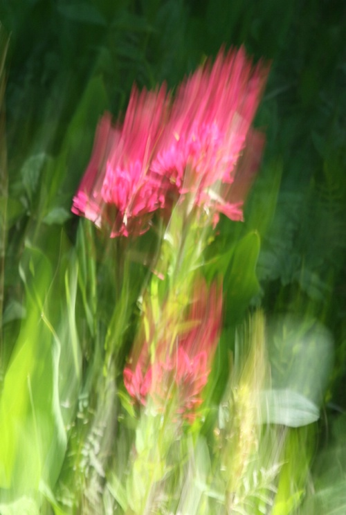 indian paintbrush abstract - ID: 8001643 © Donna Rapp