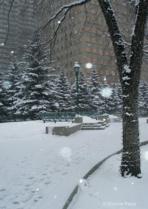 snow on plaza - ID: 8003305 © Donna Rapp