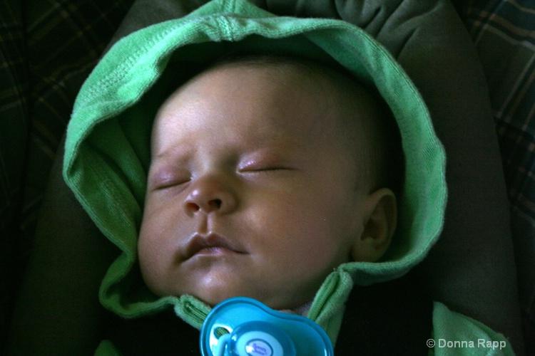 baby cassidy - ID: 8003657 © Donna Rapp