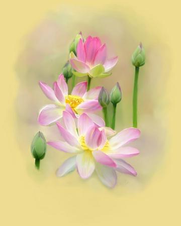 Lotus in Sunshine