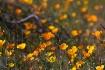 Spring Desert Lif...