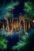 Light Forest Danc...
