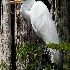 2Great Egret - ID: 8046243 © Steve Abbett