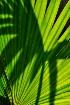 Tropical leaf sha...
