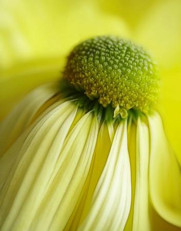 Mellow Bloom