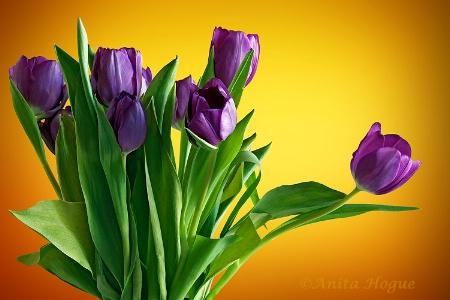 In Vivid Color