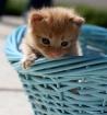 kittie in a baske...