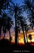 Palms Talking at ...