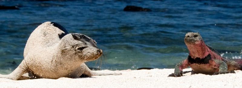 Beach Buddies 2 - ID: 8117315 © Ann E. Swinford