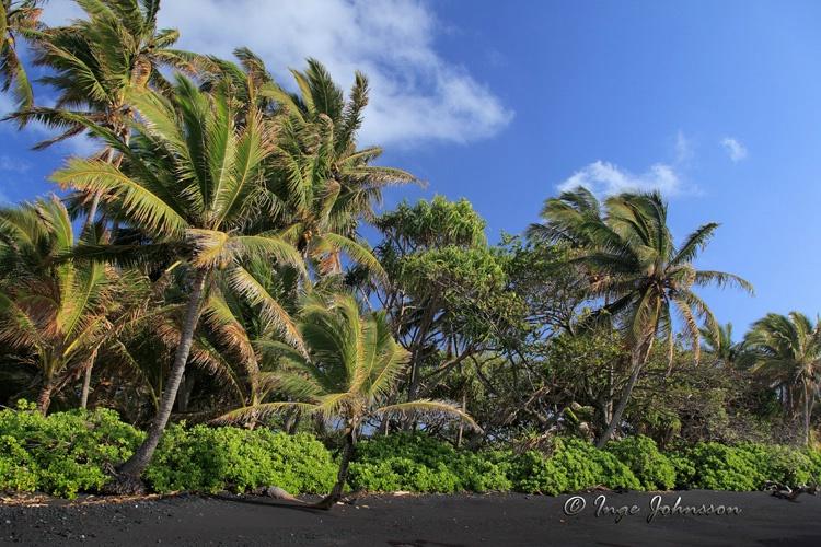 Hana Palm Grove