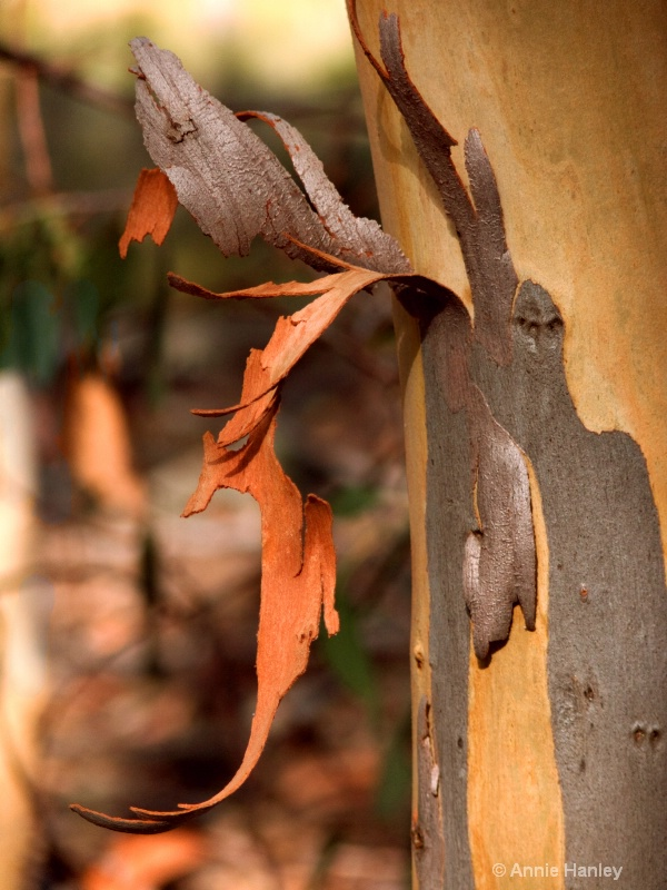 Eucalyptus art - ID: 8120046 © Ana Hanley