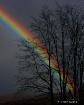 Rainbow in the Da...