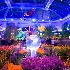 © David G. Boyd PhotoID# 8137855: Night Garden