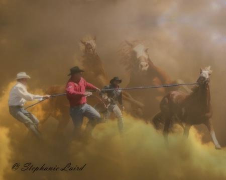 Team Agin - Professional Wild Horse Racers
