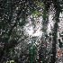 © Cynthia S. Lumberg PhotoID# 8142030: Backyard Rain forest 1