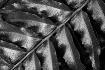 Tones & Textures