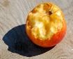 ~Backyard Apple~