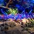 © John E. Hunter PhotoID# 8156484: Desert Botanical Gardens