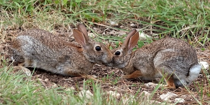 Bunny Love Easter