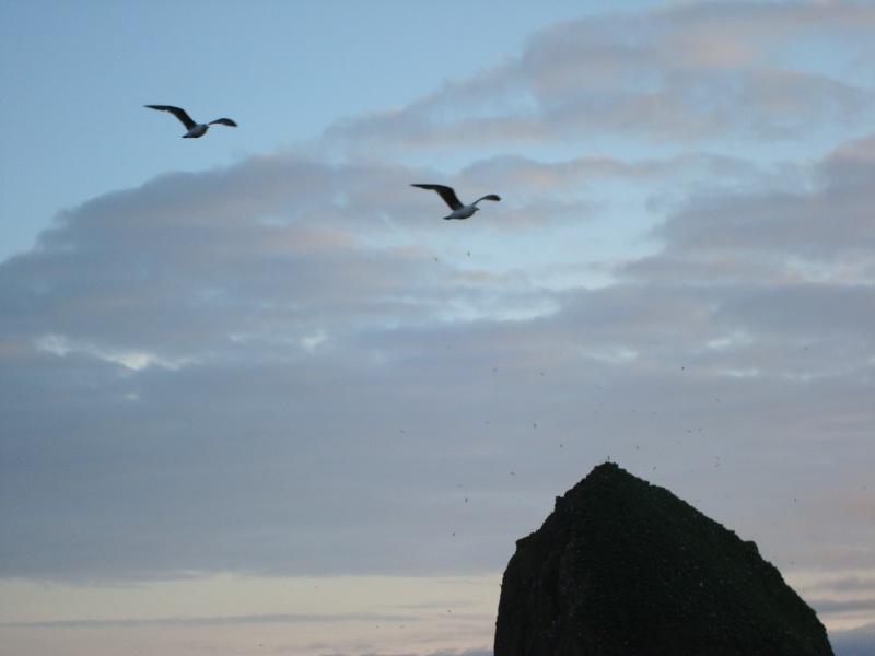 cannon beach gulls