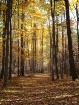 fall in deerfield...