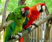 Colorful Buddies