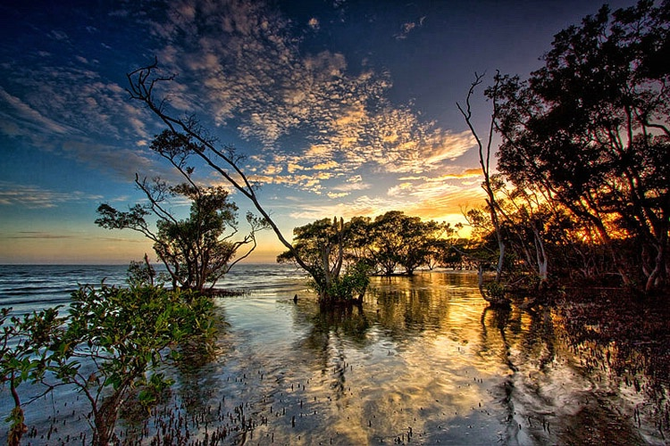Down In The Mangroves.