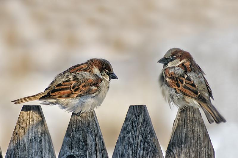 Backyard Neighbors - ID: 8183597 © Laurie Daily