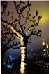 The City Tree...