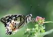 ♥ butterfly...
