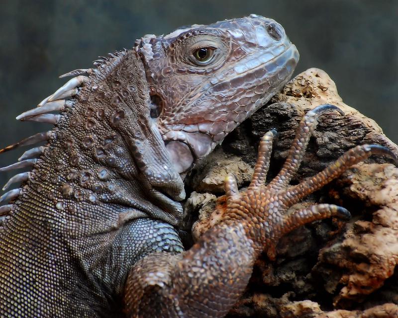 Fascinating Lizard